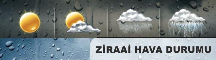 ziraihava